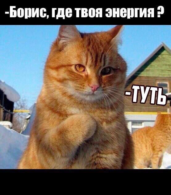 Мем с котом который прикладывает лапку к сердцу