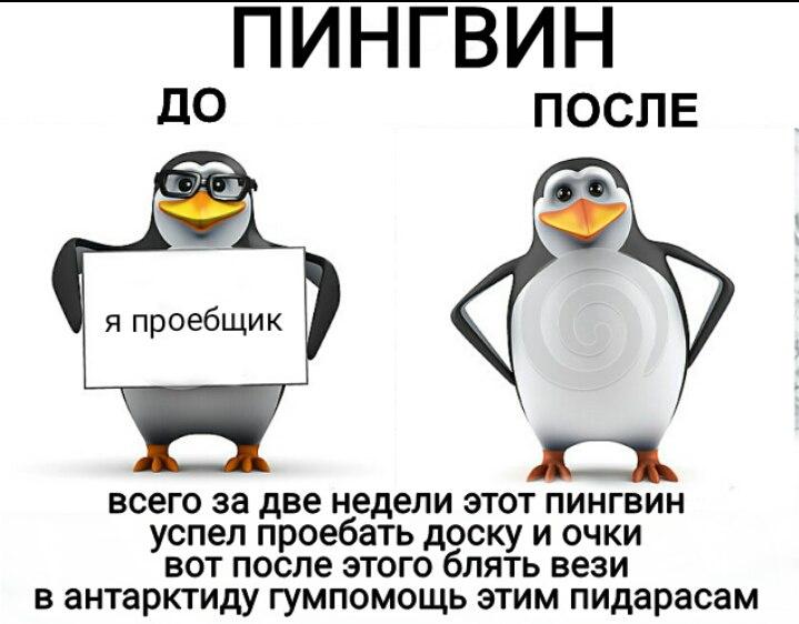 мем пингвин с пистолетом (3)