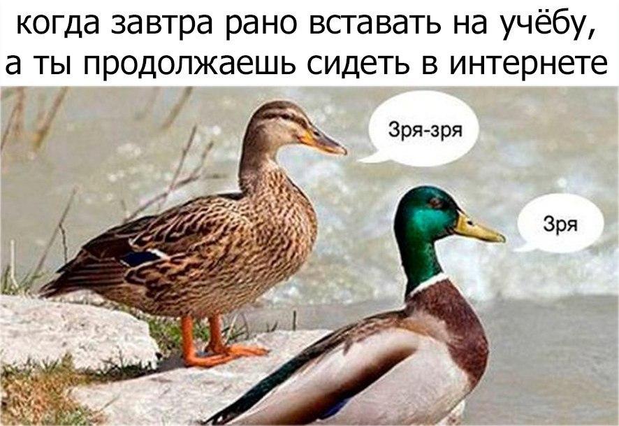 мем утка зря (1)