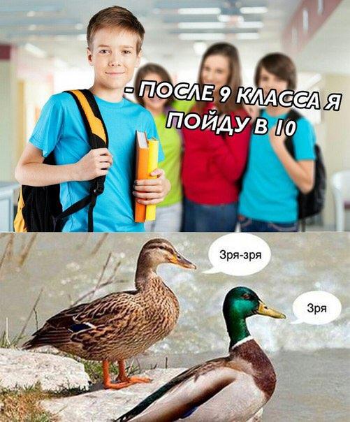 мем утка зря (4)