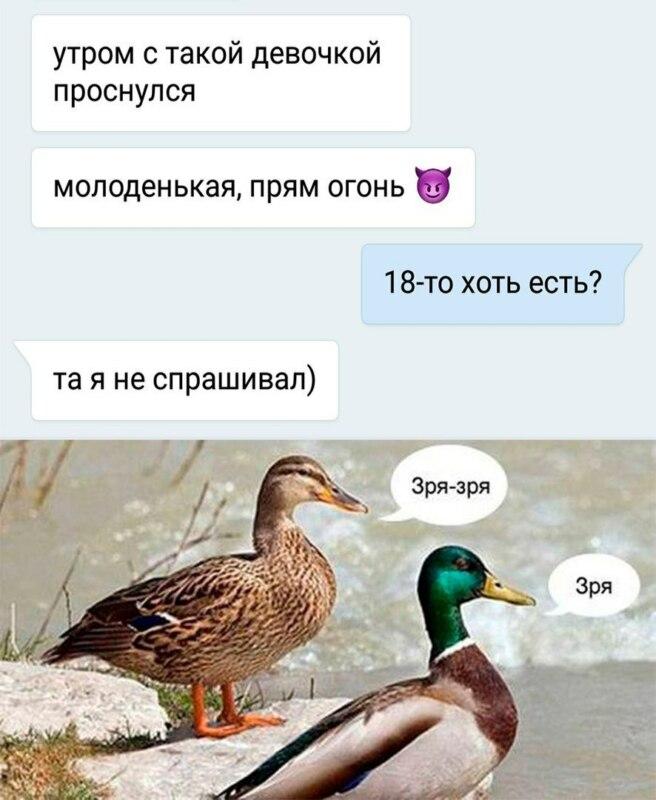 мем утка зря (5)