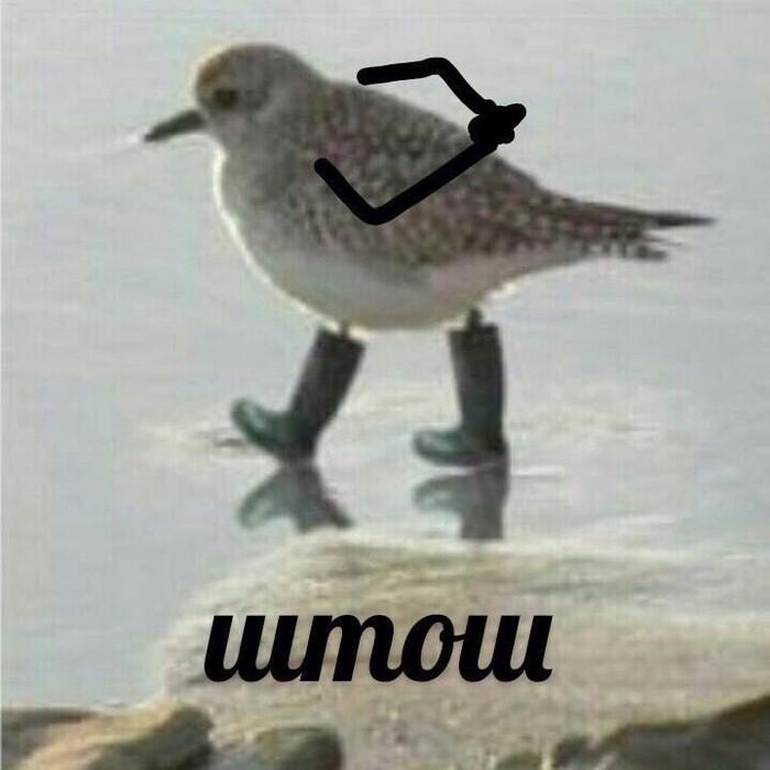 Штош, птица в сапогах, зяблик в сапогах, птица в сапогах штош, птица штош, мем штош, что такое штош, штош мем, откуда мем штош, что значит штош, что за птица штош, какая птица штош