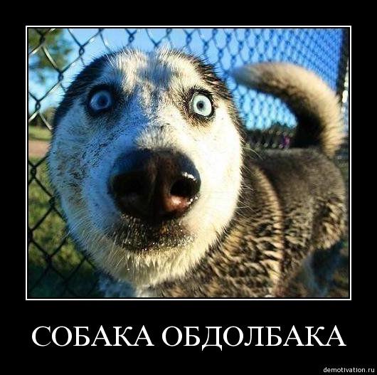 собака обдолбака