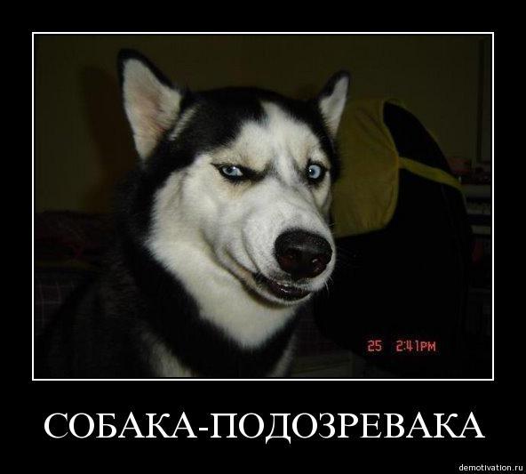 собака подозревака (1)