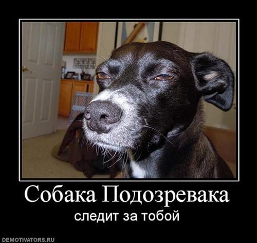 собака подозревака (2)