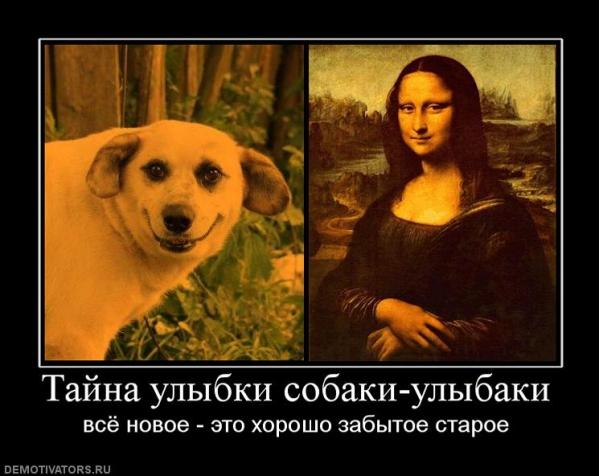 собака улыбака (3)