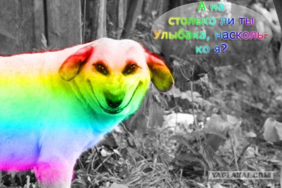 собака улыбака (4)