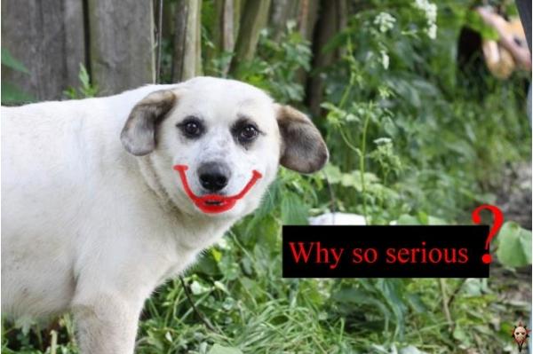 собака улыбака (5)
