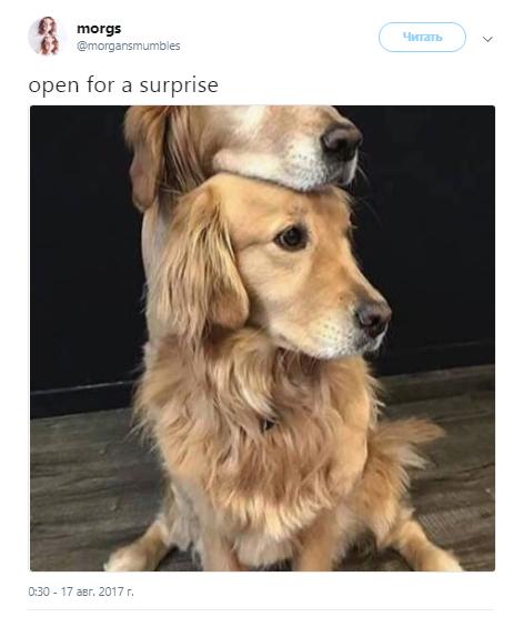 сюрприз внутри3
