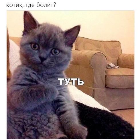 Котик, где болит?
