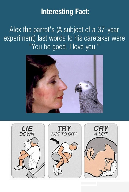 лягте постарайтесь не заплакать плачьте (2)