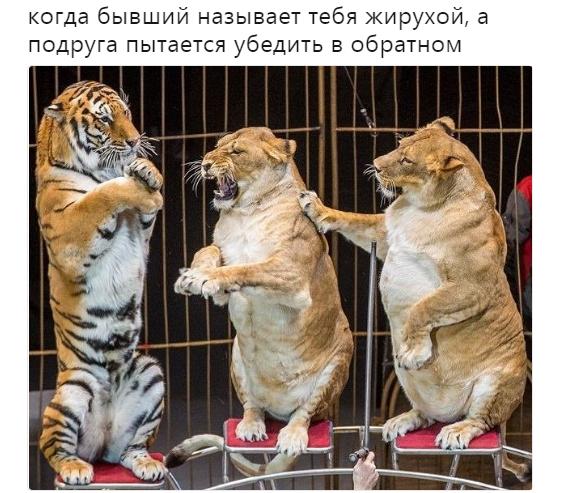 жирненькие львицы