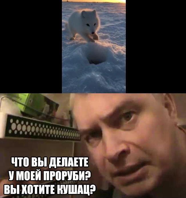 """""""Это моя мойва!"""" Рыбак и наглый песец стали героями вирусного видео"""