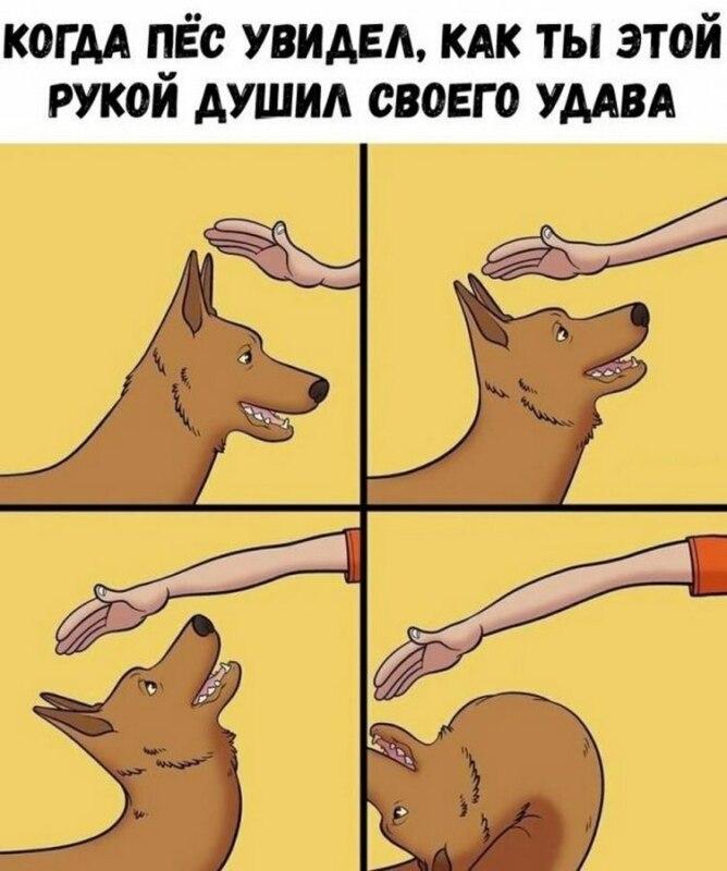 Собака уклоняется от поглаживаний