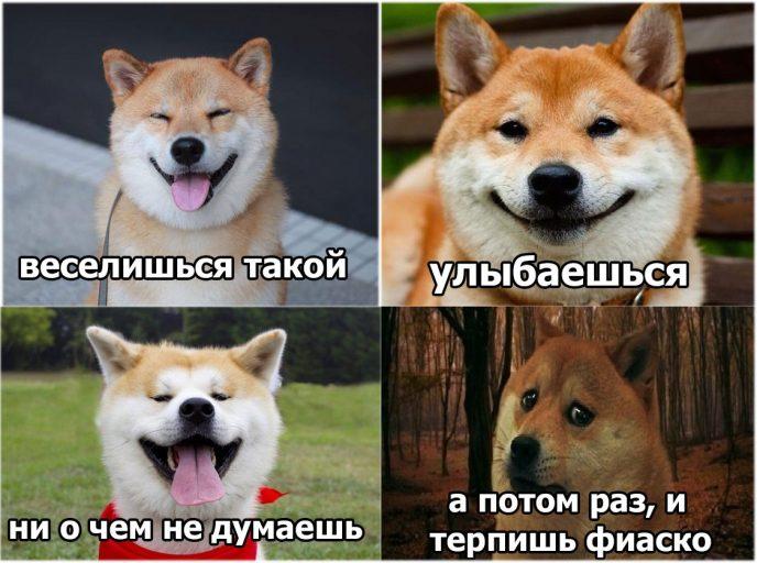 фиаско-собак