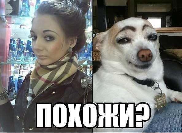 Pohozhi_ZAGRUZE.RU