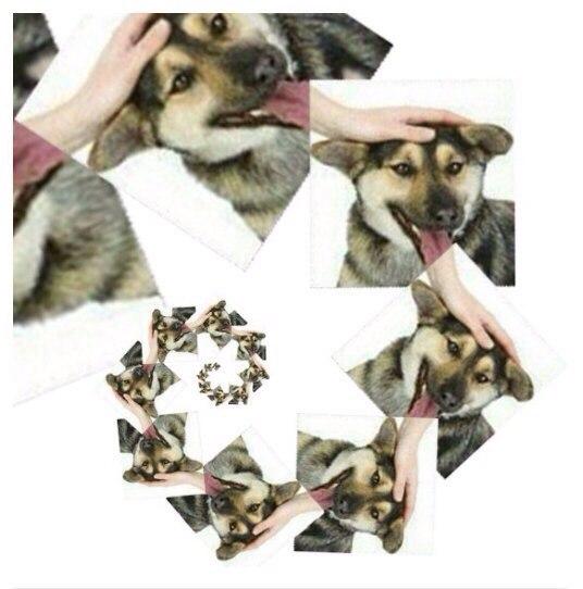 Погладь пса