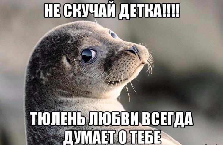 Тюлень любви