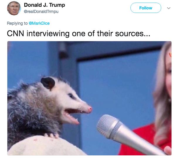 Опоссум дает интервью