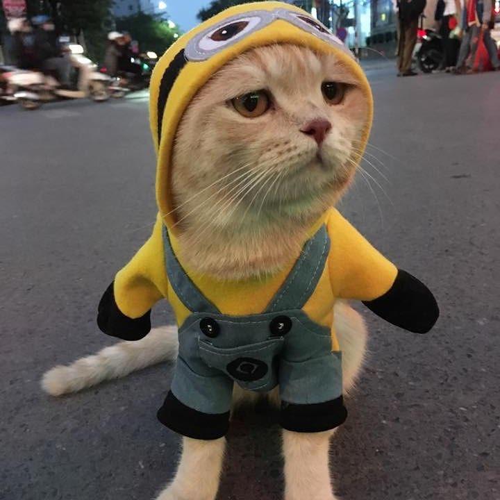 Кот в желтом плаще