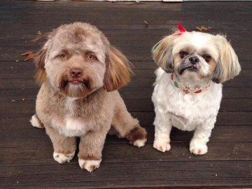 собака похожа на человека