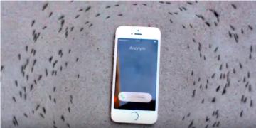 видео муравьи ходят вокруг айфона