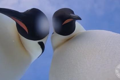 пингвины сняли селфи на забытую учеными камеру
