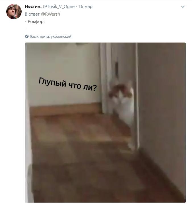 кот откликается на любые имена