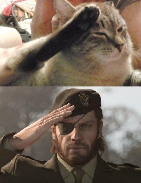 все отдают честь мем