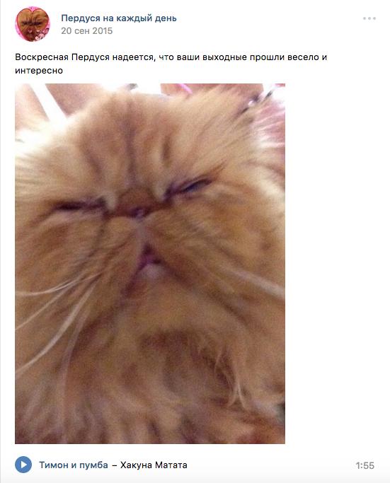 Кошка Пердуся паблик