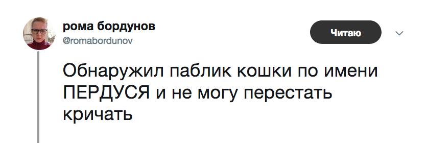 Кошка Пердуся не любит селфи и плачет, когда слушает Face. И у нее отличный паблик во «ВКонтакте»