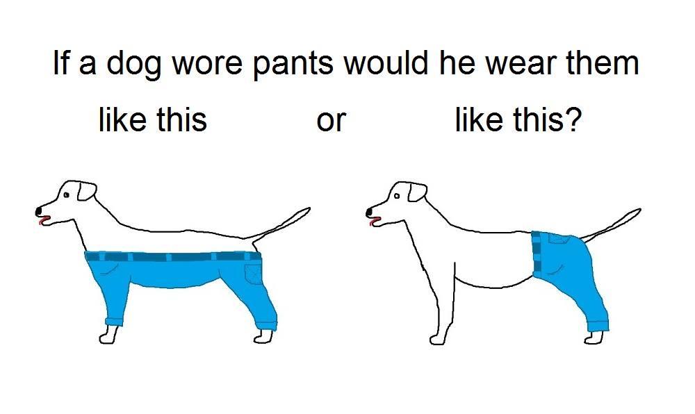 Если бы собаки носили штаны