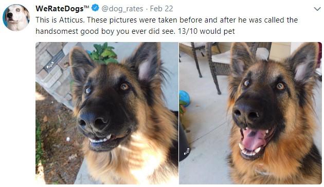 weratedogs, твиттер о собаках