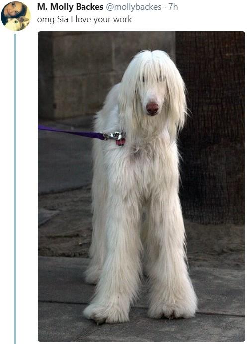 Длинноволосая собака, мем, афганская борзая, сия