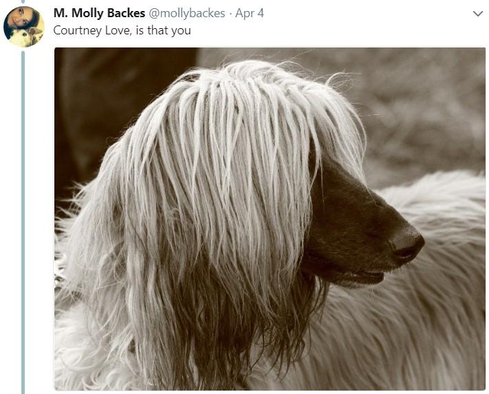 Длинноволосая собака, мем, афганская борзая, кортни лав