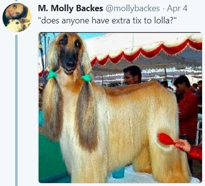 Длинноволосая собака, мем, афганская борзая