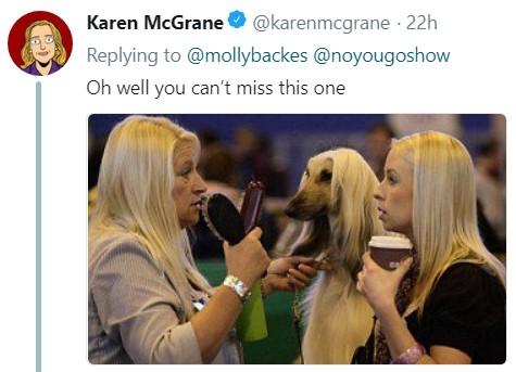 Длинноволосая собака, мем, афганская борзая, версаче