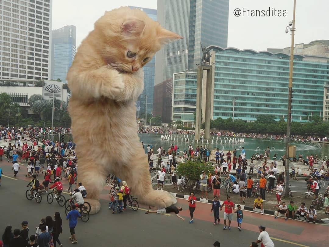 Коты-гиганты