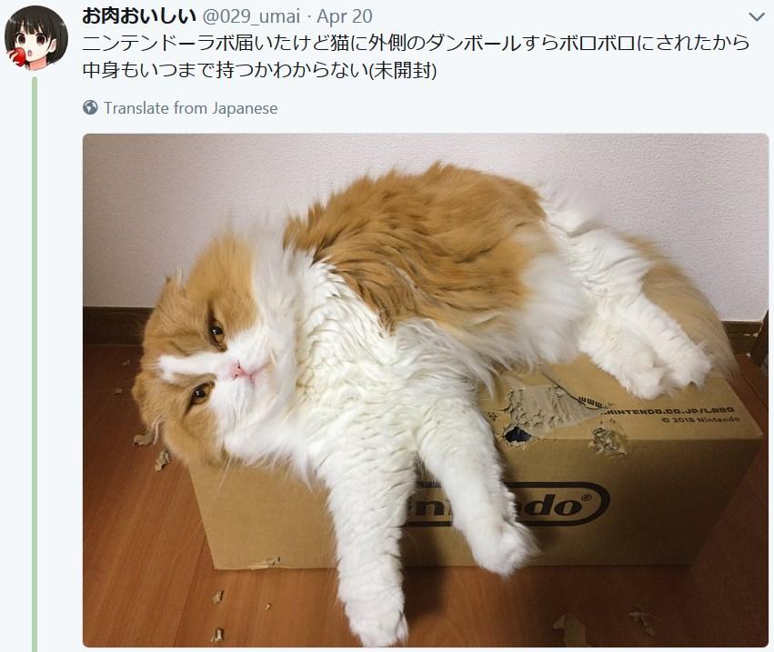 Коты и Nintendo Labo