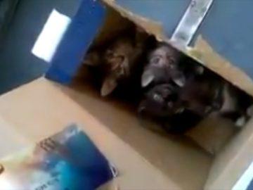 Электричку эвакуировали из-за котят