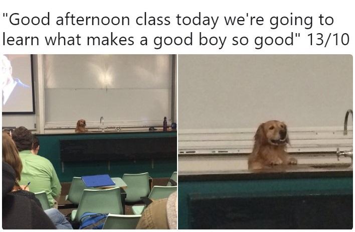Создатель твиттера WeRateDogs рассказал, как бросил колледж и сделал оценку хороших пёсиков своей работой