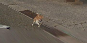 пёс погнался за машиной google