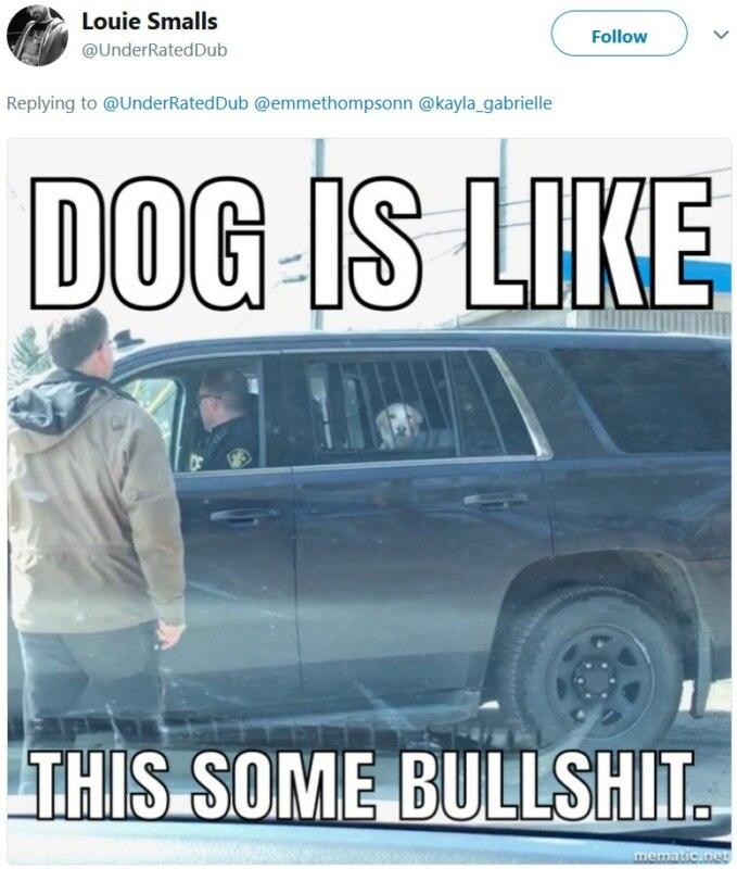 Пёс в полицейской машине