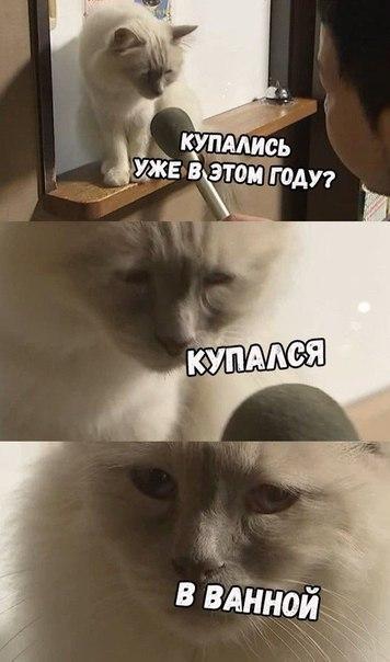 интервью с грустным котом