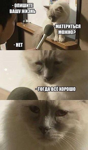 Интервью с грустным котом мем