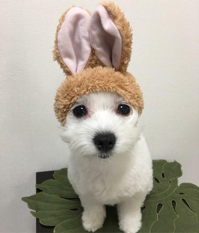 Собака с ушами Микки Мауса