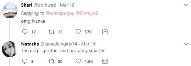 Длинноволосая собака, мем, иванка трамп