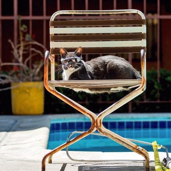 Бейгл кошка в очках