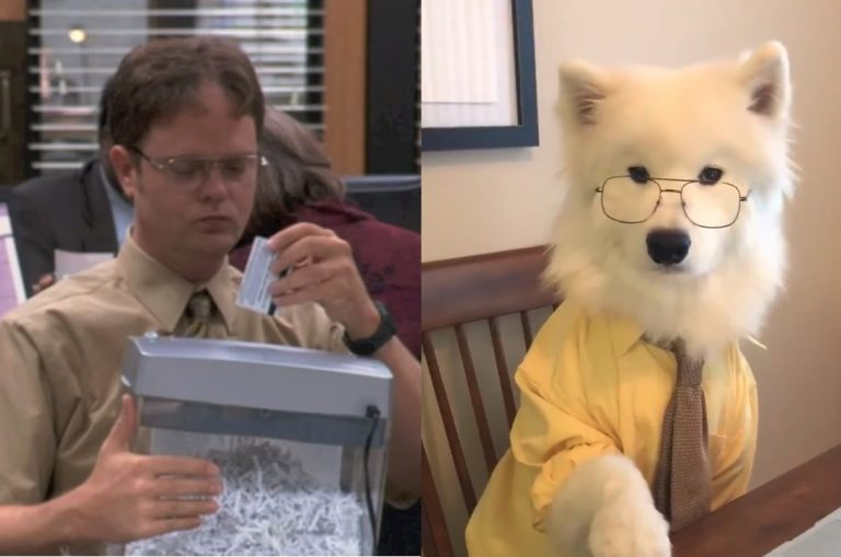 """""""Офис"""" с пёсиком"""