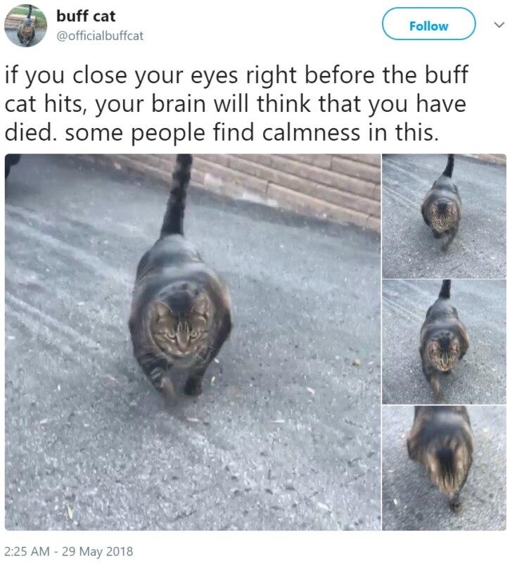 Кот-качок
